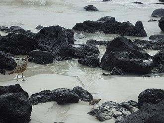 Galápagos National Park - Image: Tortuga Bay Galapagos Island of Santa Cruz
