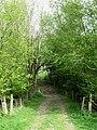 Track Through Hogtrough Shaw - geograph.org.uk - 1286149.jpg