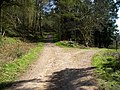 Track in Dalbeattie Forest - geograph.org.uk - 392877.jpg