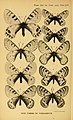 TransEntSocLondon1915PlateLIV.jpg