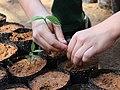 TreePlantingREGUA-Brazil-ScottGuiver.jpg