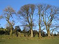 Trees and ruin near Pant-y-fotty - geograph.org.uk - 327998.jpg