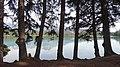 Trees at Beauvert Lake, Jasper House National.JPG