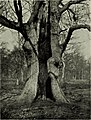 Trees in nature, myth and art; (1907) (14576600720).jpg