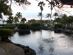 The Tropical Gardens at the Caribe Hilton in S...