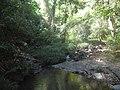 Tropska prašuma, provincija Ratanakiri, Kambodža.jpg