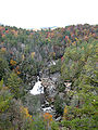 Tsuga caroliniana Linville Falls 3.jpg