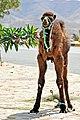 Tunisia-3578 - Have you seen my mom? (7847502052).jpg