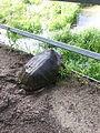 Turtle digging for nest.jpg