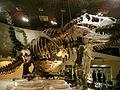 Tyrannosaurus rex Bucky - National Museum of Nature and Science.jpg