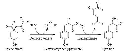 Tyrosine biosynthesis.svg