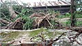 USDS Nargis Rangoon Uprooted Trees.jpg
