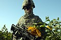 US Army 52938 TAJI, Iraq - Spc. Marcus Jeter, of Atlanta, walks through a sunflower field near Taji, Oct. 5, during a joint patrol with the Iraqi Army. Jeter, an artilleryman assigned to Company A, 1st Battalion, 8.jpg