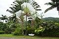 Végétation à la roça São João dos Angolares (São Tomé) (1).jpg