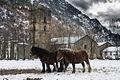 Vall Farrera - cavalls.jpg