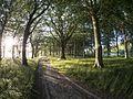 Vejlø skov - panoramio (5).jpg