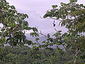 View from Canopy Tower in Gamboa, Panama 03.jpg