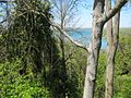 View of Niagara River from Queenston Heights, Ontario - panoramio.jpg