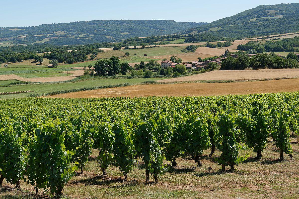 La route du vin en alsace a poils avec 2 amatrices exhib - 5 6