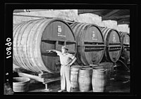 Vintage activities at Richon-le-Zion, Aug. 1939. Close up of some of the large hogs heads of wine LOC matpc.19788.jpg