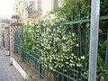 Visit-a-hercolano 15235660328 o 46.jpg