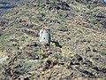 Vista de un molino - panoramio.jpg