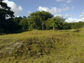 Vlakte van Waalsdorp (Waalsdorpervlakte) 2016-08-10 img. 373.png