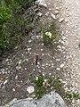 Vora el riu Glorieta a Mont-ral P1260700.jpg