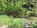 Vyžlovský rybník (012).jpg