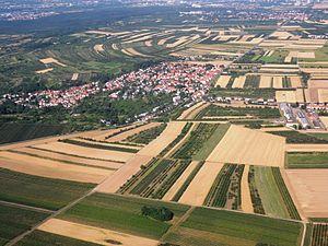WackernheimFinthenObstbaumfelder.JPG