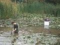 Wading Weeding - geograph.org.uk - 567089.jpg