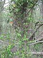 Wapanocca National Wildlife Refuge Crittenden County AR 055.jpg