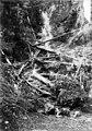 Waterfall behind fallen trees, 1900-1910 (WASTATE 3114).jpeg