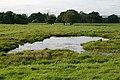 Watering Hole - geograph.org.uk - 547216.jpg