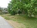 Weert-grafheuvelveld Boshoverheide (21).jpg
