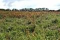 West Buckland, near Upcott Farm - geograph.org.uk - 504590.jpg