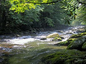 The Sugarlands - The West Fork of the Little Pigeon River in the Sugarlands.