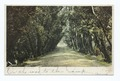 Willow Road, Glouchester, Mass (NYPL b12647398-66508).tiff