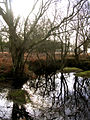 Wintry pond north of Berry Wood, New Forest - geograph.org.uk - 110855.jpg