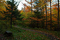 Wooden-bench-fall-foliage-forest-park-foot-trail - West Virginia - ForestWander.jpg