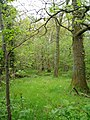 Woodland, Llanelidan - geograph.org.uk - 170339.jpg