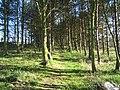 Woodland Path - geograph.org.uk - 1249813.jpg