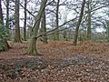 Woodland south of Coopers Lane Road, Hertfordshire - geograph.org.uk - 149239.jpg