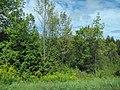Woodlands and Goldenrod (6167833838).jpg