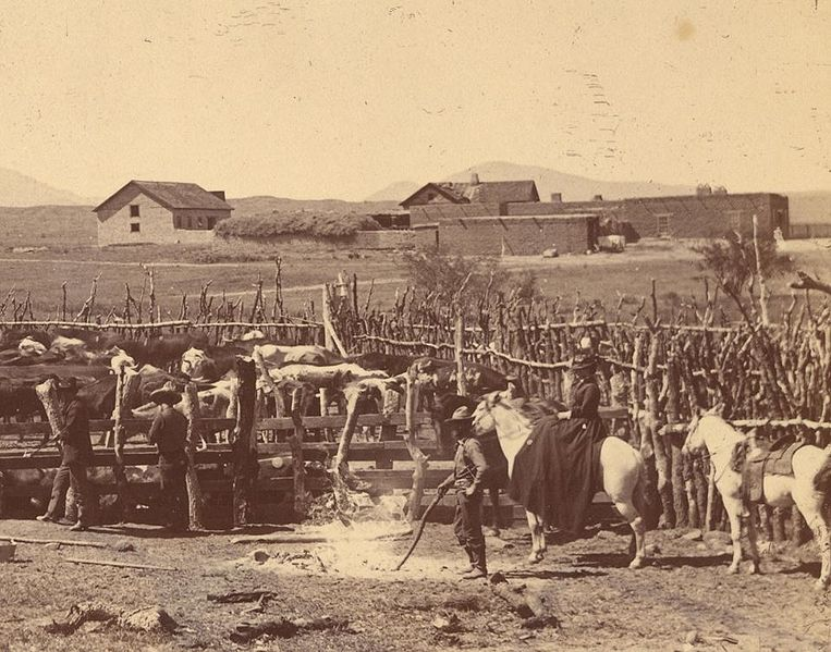 File:Working with cattle Empire Ranch Arizona 1890s.jpg