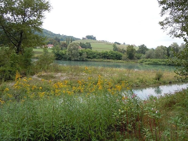 Yenne (Savoie): Le Rhône: ZNIEFF du Haut-Rhône de la Chautagne aux chutes de Virignin - Face au hameau de Magnin, Commune de Nattage. (Ain)