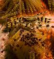 Zebra crab on fire urchin.jpg