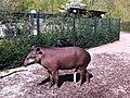Zoo lavlandstapir - panoramio.jpg