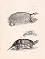 Zoology of New York (Plate 6) (7375394408).jpg
