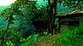 (09.08.2013) - (TRABZON - KÖPRÜBAŞI - Fidanlı Mahallesi - Kutluca Mevki) - panoramio.jpg